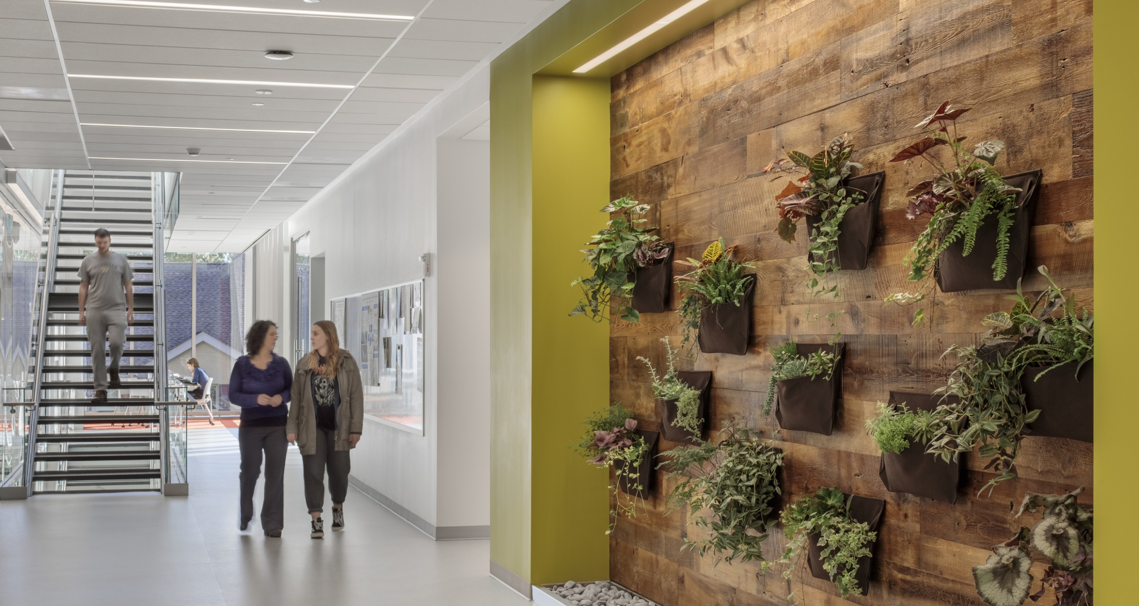 A green wall adorns a hallway in the College of Wooster Hall of Life Science